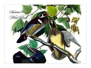 Wood Duck Placemat, Hardboard