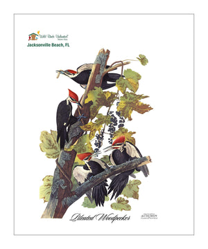 WBU255, Pocket/Kitchen/Tea Towel, PW, PILEATEDWOODPECKER, S