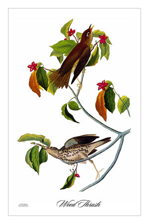 WoodThrush (GFG)
