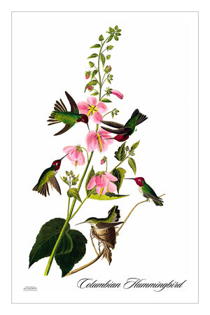 ColumbianHummingbird (HFT)
