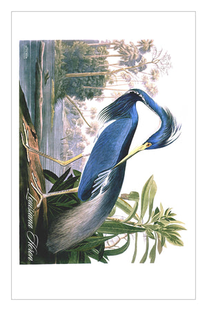 LouisianaHeron (HFT)