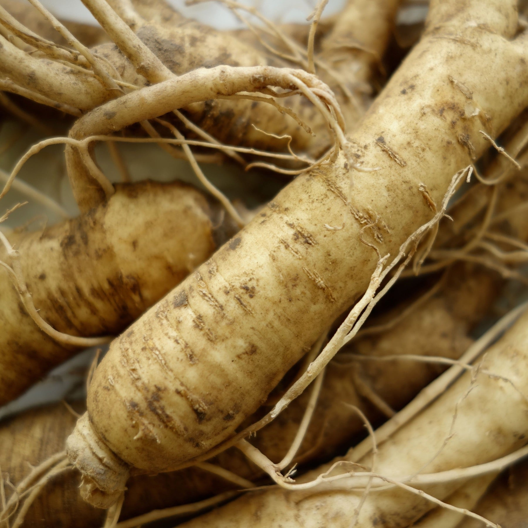Are you in love with Wisconsin Ginseng?