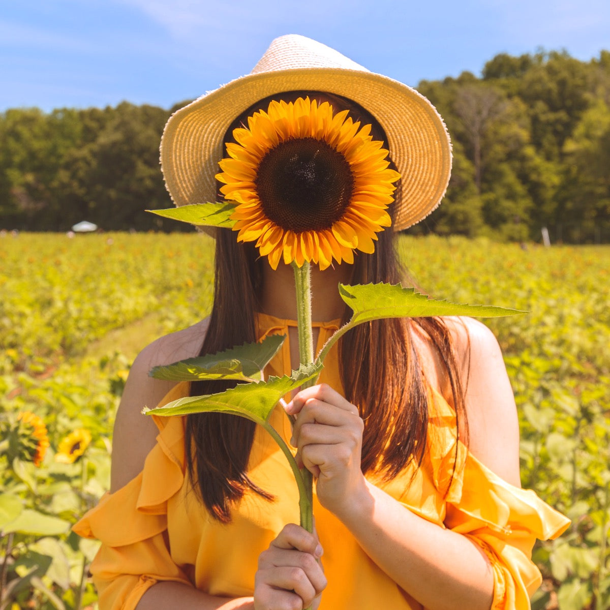 Why sunflowers matters for happy hair