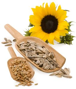Sunflower Seeds Lower Cholesterol