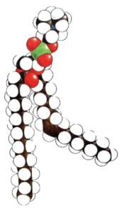 article1-PC-molecule