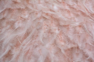 Blush colour Feathers
