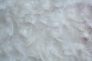 Edwardian White Feathers