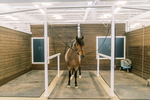 Indoor Grooming Bays Livermore Barn Willow and Wolf Ranch