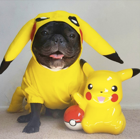 21 Small Dog Costumes for Halloween