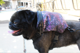 Galaxy Dog Harness Backpack