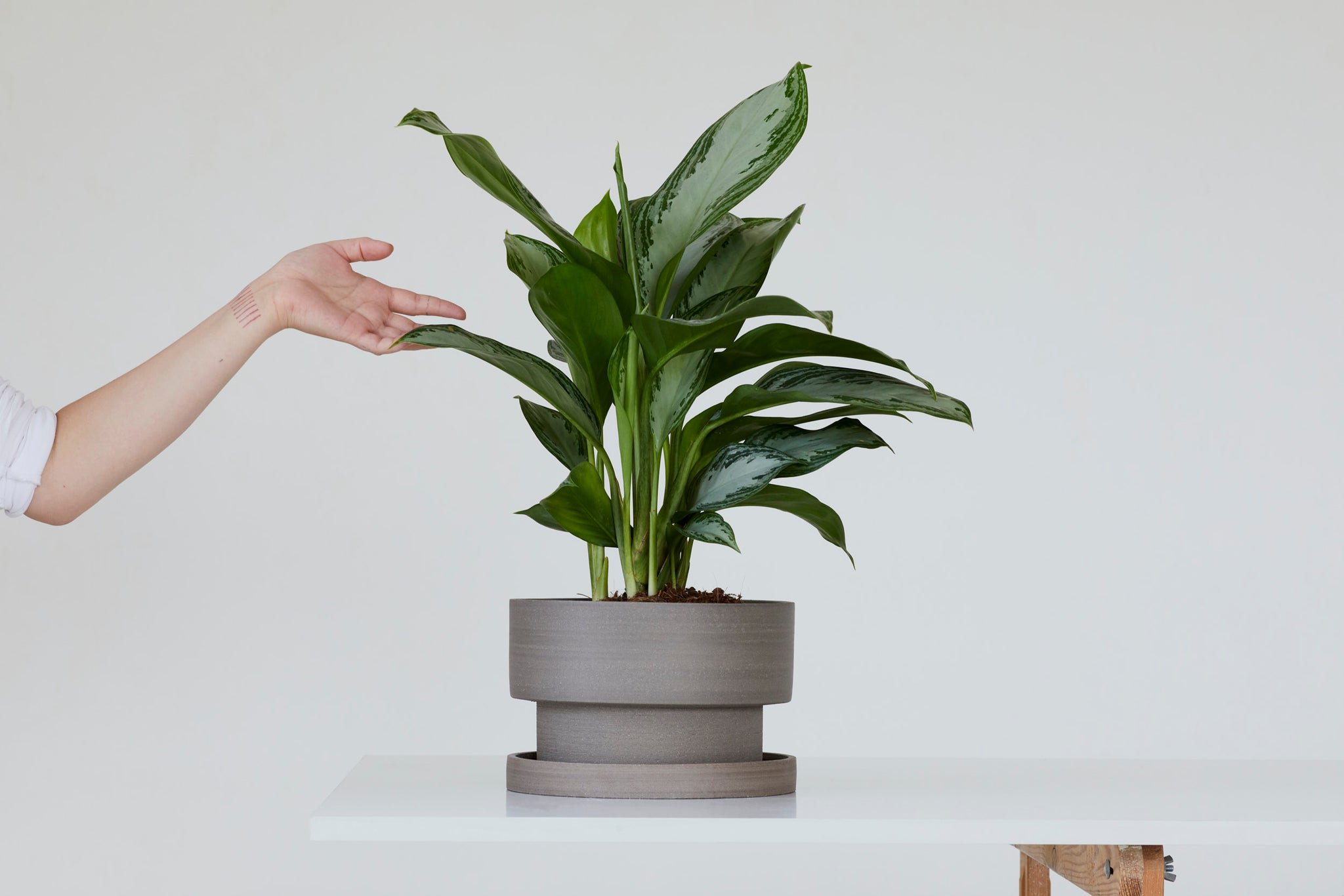 Flower pot - gray
