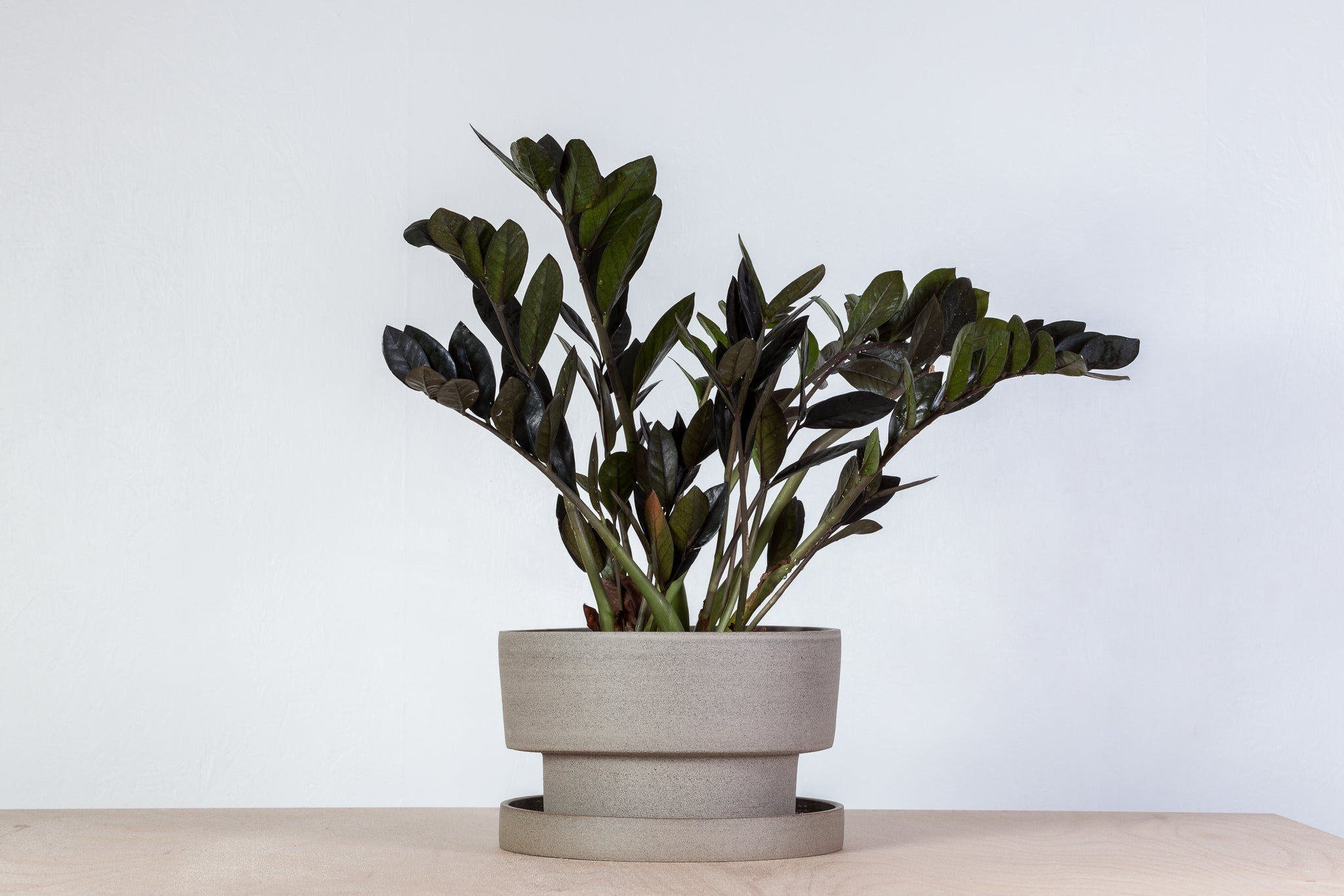 Flower pot - gray with iron dots