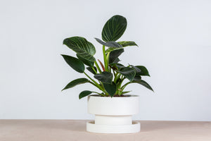 Flower pot - white porcelain