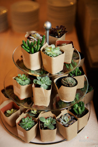succulents wedding favor