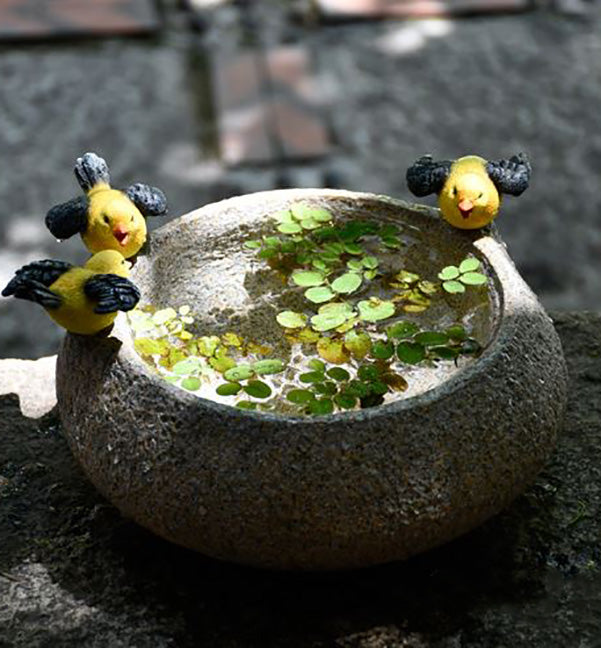 Resin pot for Aquatic plants - Birds