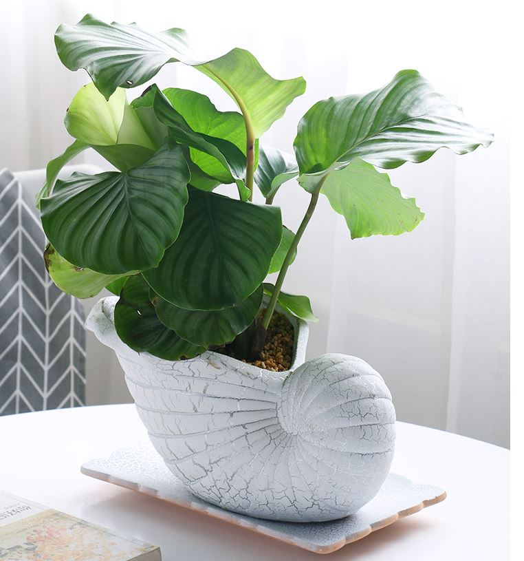 Ceramic white seashell pot with a drainage hole