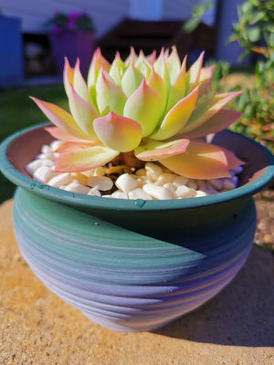 Set of 4 - Ceramic Succulent Pots With Drainage Hole - 13cm Diameter, 9cm Tall