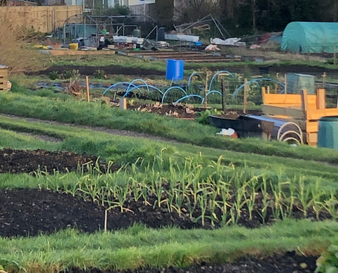 Many people take great pleasure from tending an allotment.