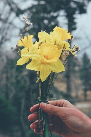 At Sunday school, we would receive a bunch of daffodils to give to Mum. Photo by Sam Mgrdichian on Unsplash