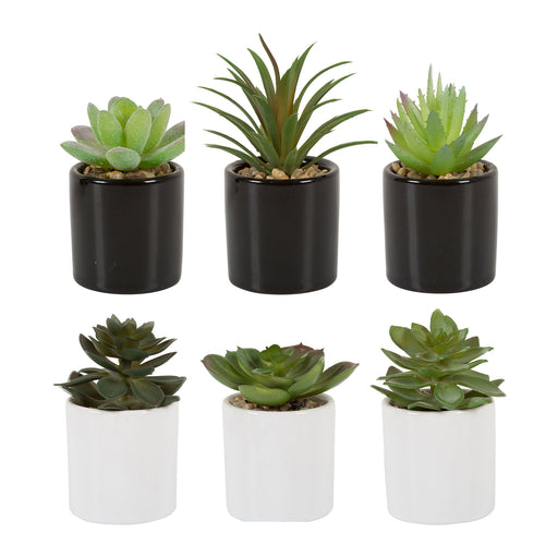 Plante grasse pot céramique (lot de 3)