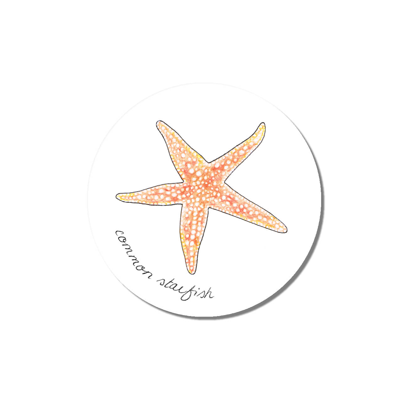 Emma Lawrence Coaster Starfish