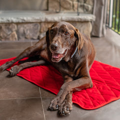 Red Velvet Dog Blanket