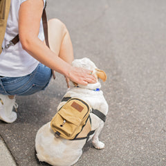 Dog Park Backpack for Humans