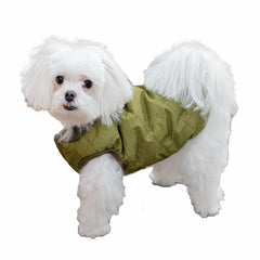Green Dog Jacket