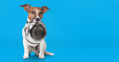 Finding the Right Bowl for Your Pet