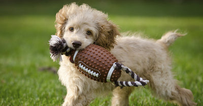 Pet Safety for the Big Game