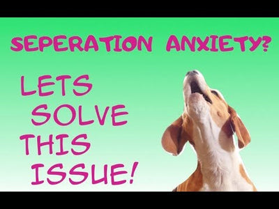 *Quick Tips* On anxiety in dogs and puppies