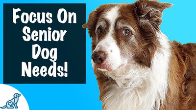 How To Care For A Senior Dog - For Dogs 8+ Years Old