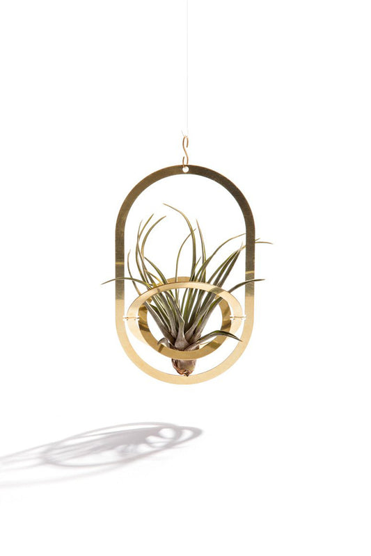 Air Plant Holder - Air Pendant