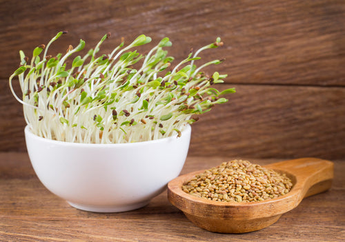 Growing Your Own Sprouts And Microgreens