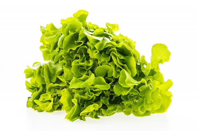 Green Oak Lettuce Per Pack