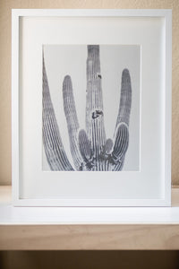 Saguaro Cactus Digital Download