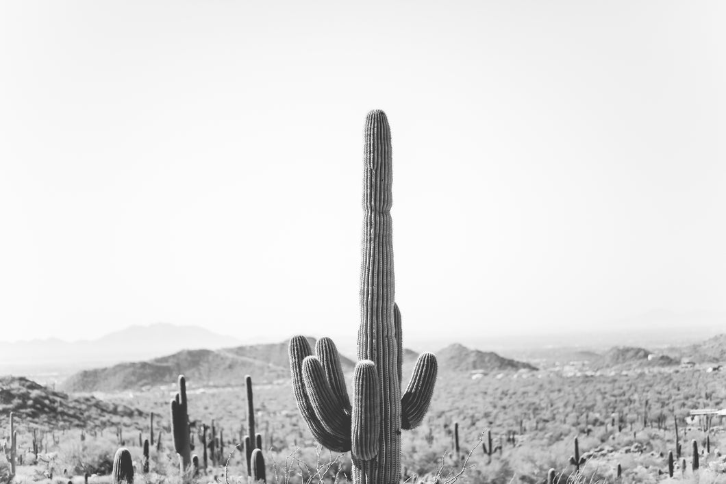 Saguaro Look-out Digital Download