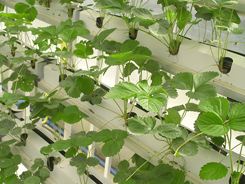 Growing medium for hydroponic systems