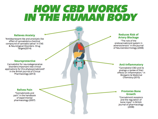 By understanding how we function biologically, CBD can offer relief in chronic pain, anxiety, inflammation, depression, and many other health conditions.