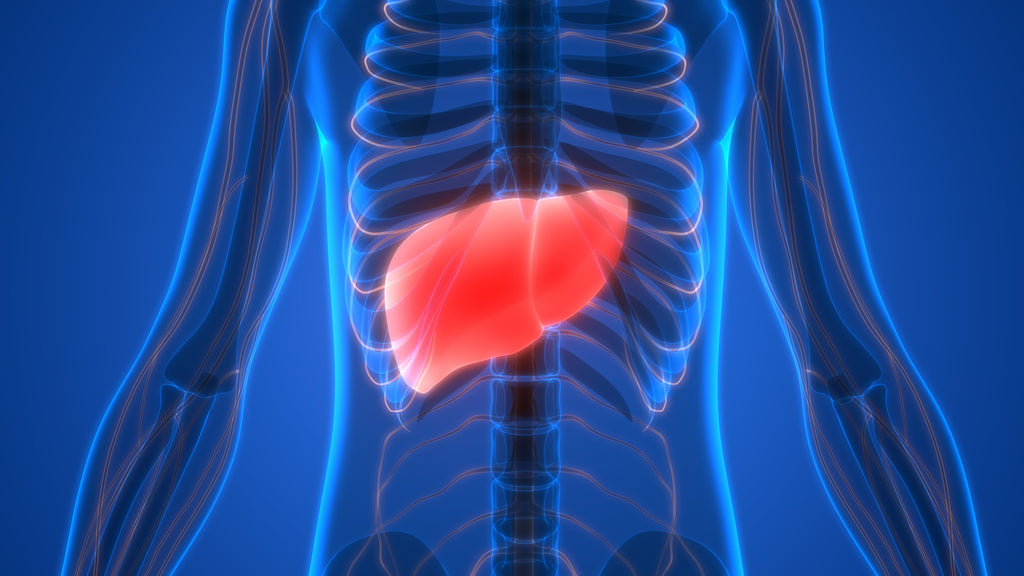 What Are Liver Biomarkers and How to Regulate Them