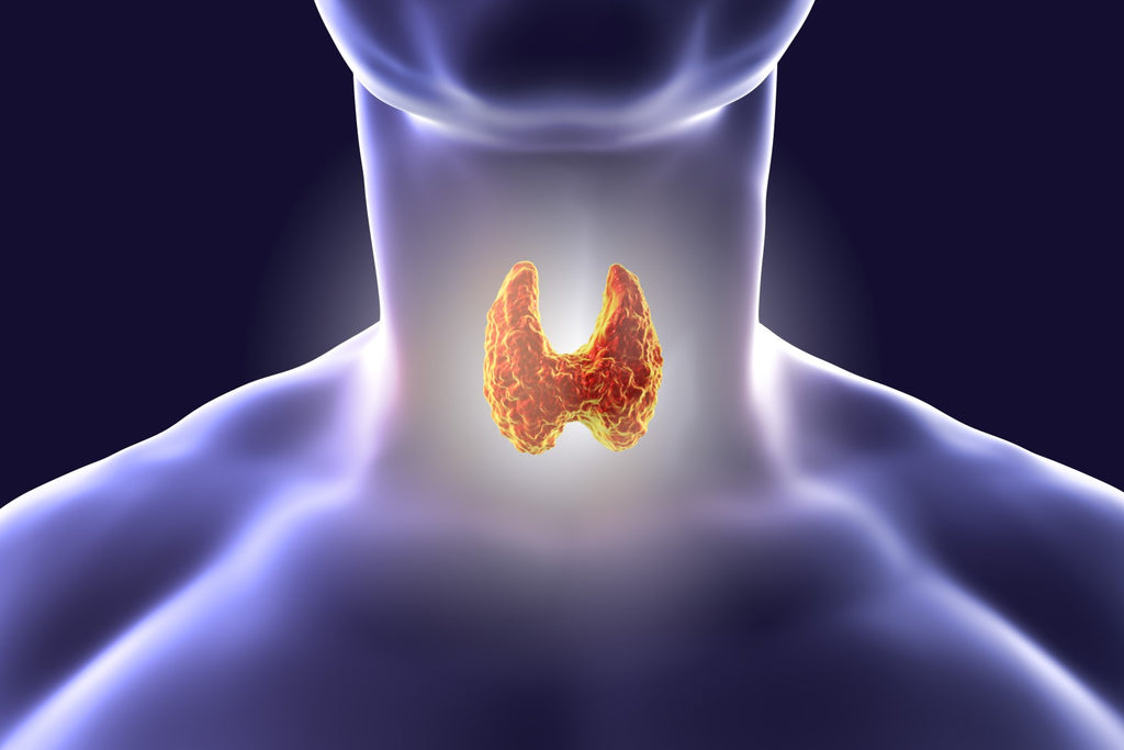 What you need to know about the Thyroid Stimulating Hormone