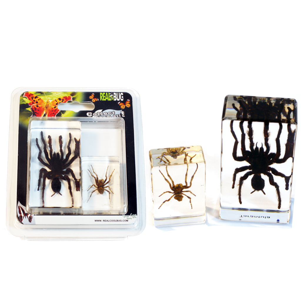 PWC424<br/>Tarantula & Spider Paperweight Collection