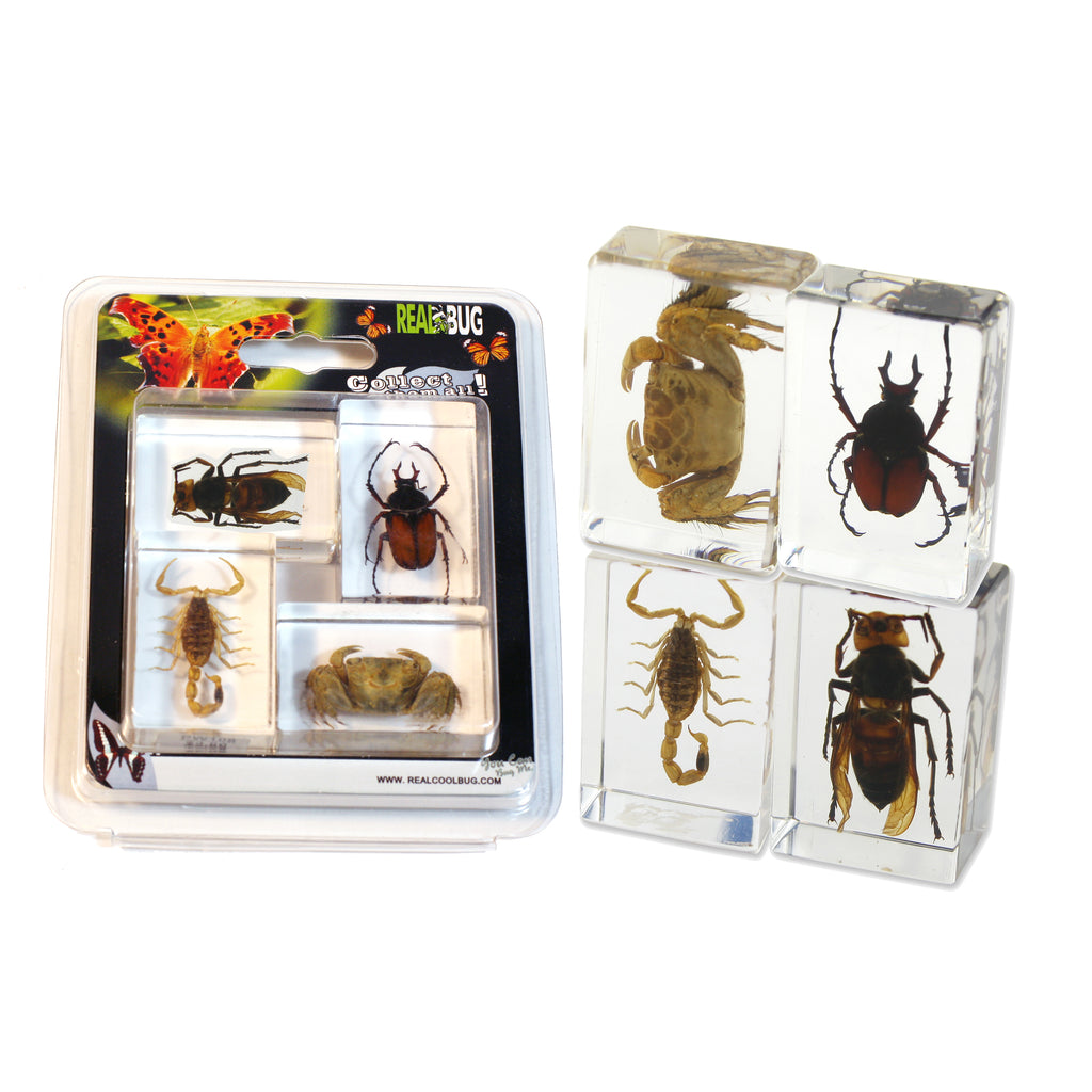 PWC443<br/>Insect & Arachnid Paperweight Collection