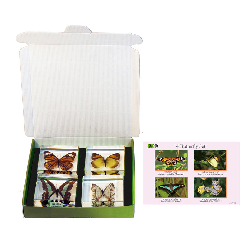 BF422<br/>4 Piece Butterfly Collection
