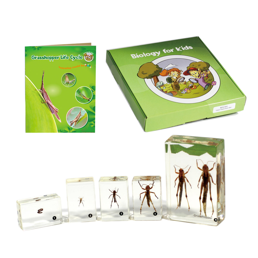BFK1105<br/>Biology for Kids-Grasshopper Life Cycle