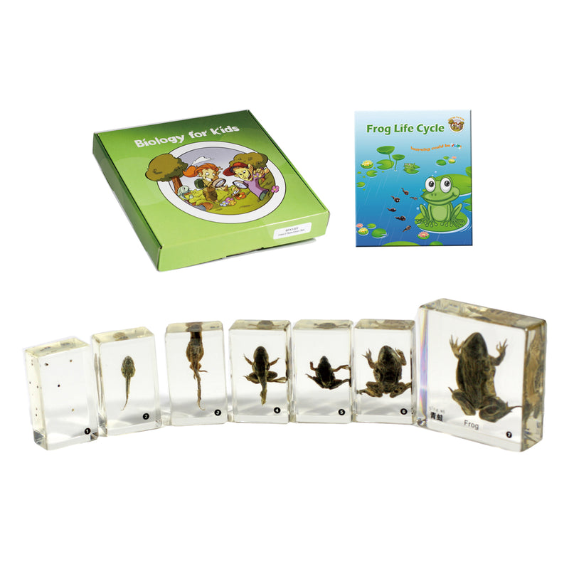 BFK1106<br/>Biology for Kids- Frog Life Cycle