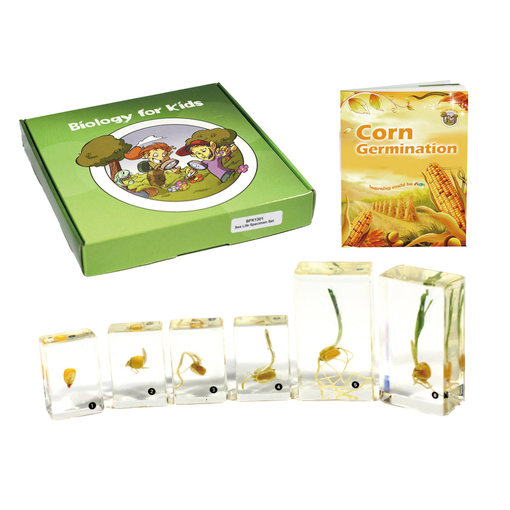 BFK1131<br/>Biology for Kids- Corn Germination