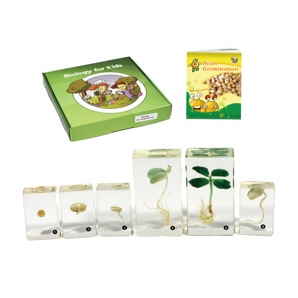 BFK1132<br/> Biology for Kids- Bean Germination