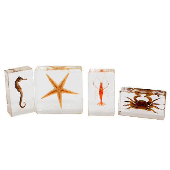 BFK1301<br/>Biology For Kids-Sea Life Specimen Set