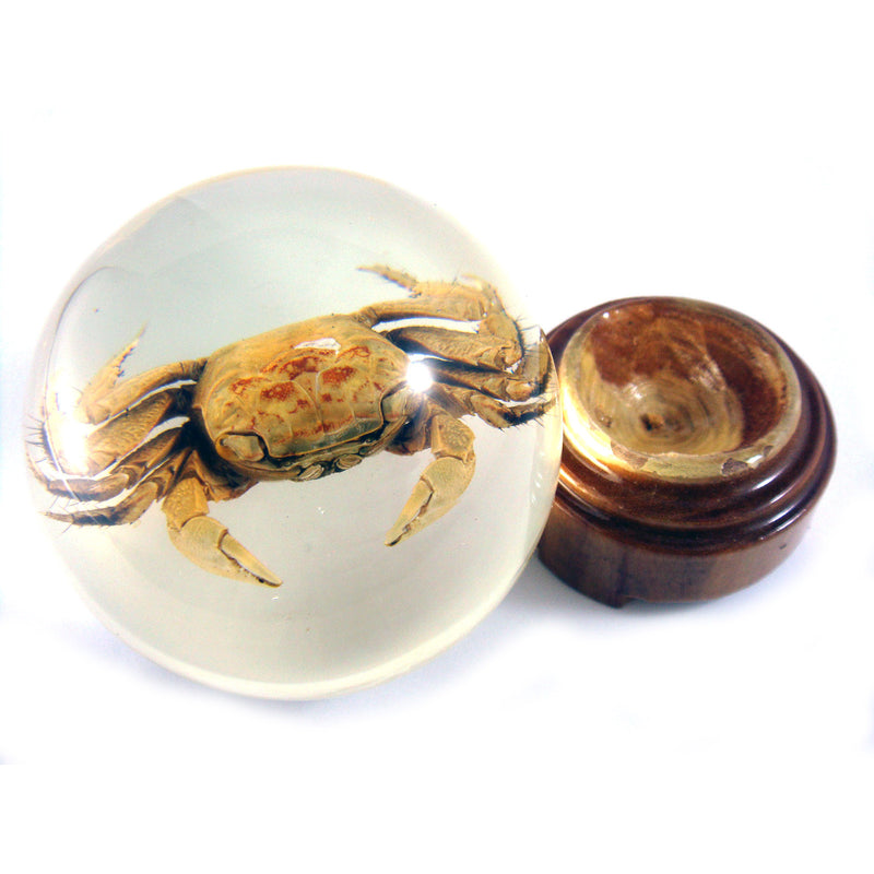 Crab Globe Paperweight with Pedestal (BL04)